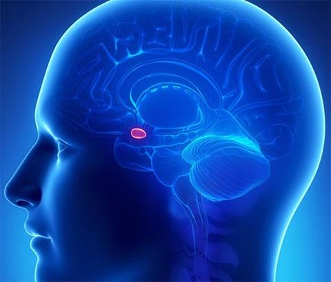 La relazione tra il cervello e il primo amore