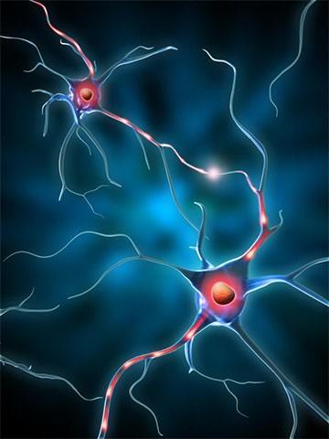 Serotonina Disordine Affettivo Stagionale