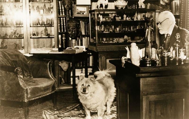 Josi, il cane di Freud
