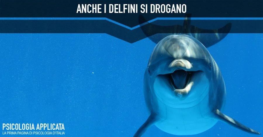Anche i delfini si drogano