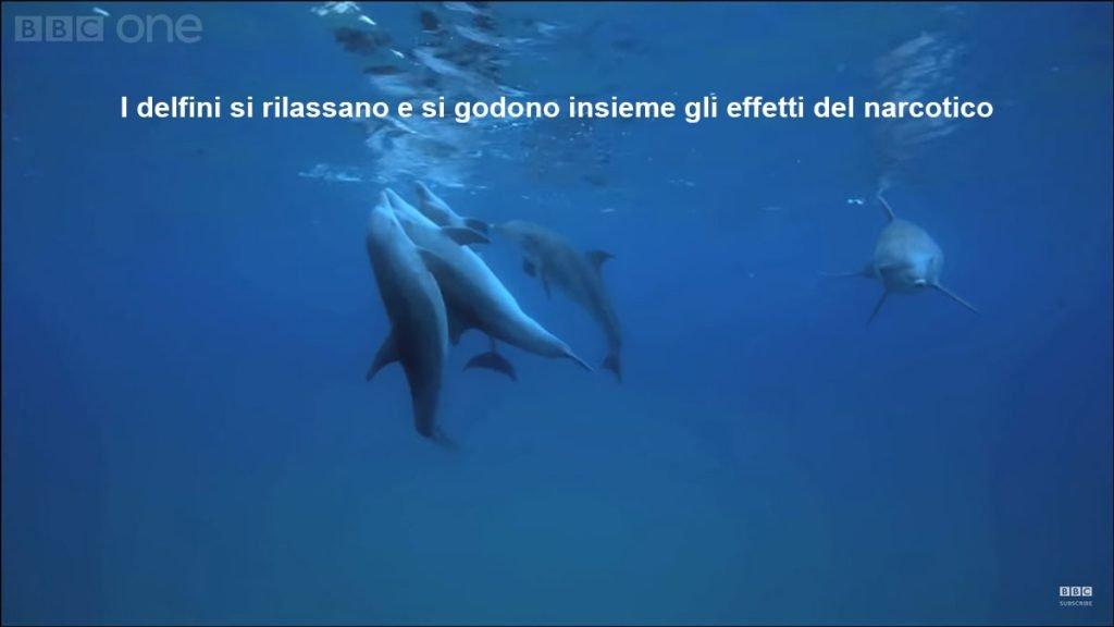 delfini si rilassano
